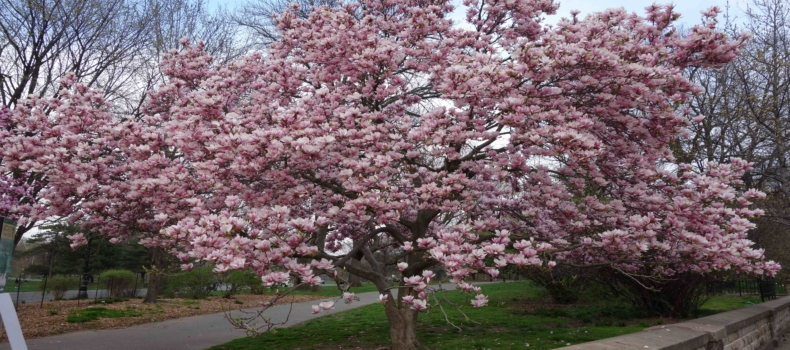 A Commemorative Tree